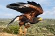 Core: Οι γητευτές των Harris Hawk στην Ελλάδα