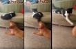 Η γάτα ανέχτηκε αρκετά από τον σκύλο