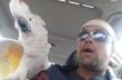 Ο πολυλογάς παπαγάλος