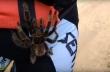 Ταραντούλα ανεβαίνει στο πόδι ενός ποδηλάτη