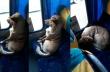 Αδέσποτος σκύλος κάνει βόλτα με το λεωφορείο