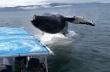 Φάλαινα ρίχνει βουτιά δίπλα σε σκάφος με επιβάτες