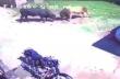 Ταύροι μονομαχούν και καταστρέφουν αυτοκίνητο