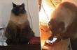 Ο γάτος κλείνει το ξυπνητήρι