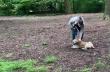 Ρατσιστική συμπεριφορά προς άνδρα που ζητά από γυναίκα να βάλει λουρί στον σκύλο της