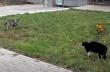 Ο σκύλος, η γάτα και ο Ennio Morricone