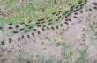 Ψυχρός πόλεμος μεταξύ τερμιτών και μυρμηγκιών