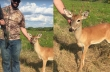 Ελάφι επισκέπτεται κυνηγούς