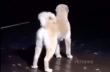 Ο σκύλος με το παράξενο γάβγισμα
