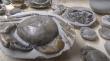 Καβούρι 12 εκατομμυρίων ετών