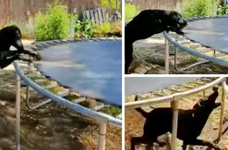 Ένας σκύλος εφηύρε το δικό του παιχνίδι
