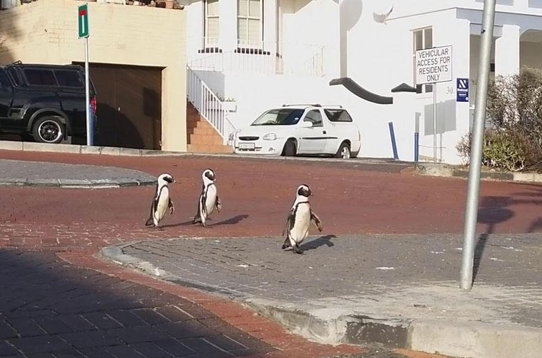 Τρεις πιγκουίνοι στην πόλη