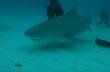 Κατάδυση ανάμεσα σε καρχαρίες