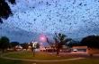 Αμέτρητες νυχτερίδες εισέβαλαν σε πόλη της Αυστραλίας