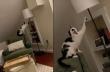 Γάτα μαθαίνει πώς να ανάβει μια λάμπα
