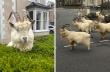 Κατσίκες κυκλοφορούν στους άδειους δρόμους της Ουαλίας