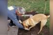 Σκύλος βοηθός στην κηπουρική