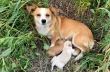 Μια σκυλίτσα περιμένει τον ιδιοκτήτη της να επιστρέψει