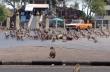 Εισβολή μαϊμούδων σε πόλη της Ταϊλάνδης