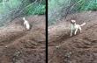 Σκύλος εφηύρε νέο παιχνίδι