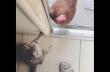 Κότα και γάτα σε αντιπαράθεση