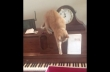 Γάτα vs πιάνο