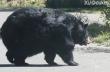 Μια πολύ χορτάτη αρκούδα