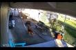 Σκύλος χρησιμοποιεί μια σκάλα για να ανέβει στην οροφή