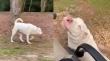 Ένας τυφλός σκύλος βρίσκει τον ιδιοκτήτη του