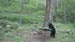 Μαύρη αρκούδα εξερευνά μια παιδική χαρά