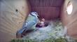 Σκηνή τρόμου σε φωλιά πουλιών