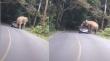 Ελέφαντας επιτίθεται σε αυτοκίνητο