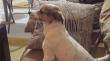 Σκύλος παρακολουθεί την ταινία τρόμου «The Conjuring»