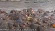 Ιπποπόταμος: το πιο επικίνδυνο ζώο στην Αφρική